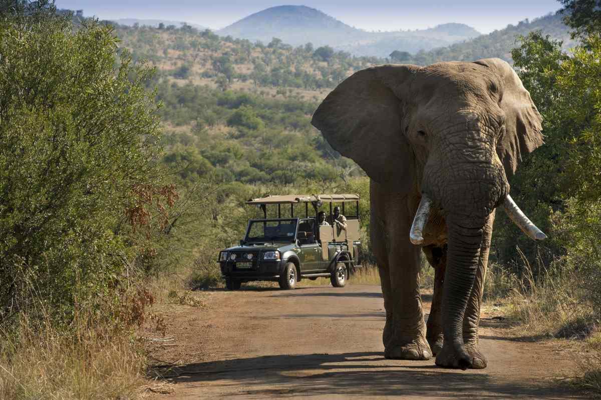 Safari Tour South Africa Johannesburg