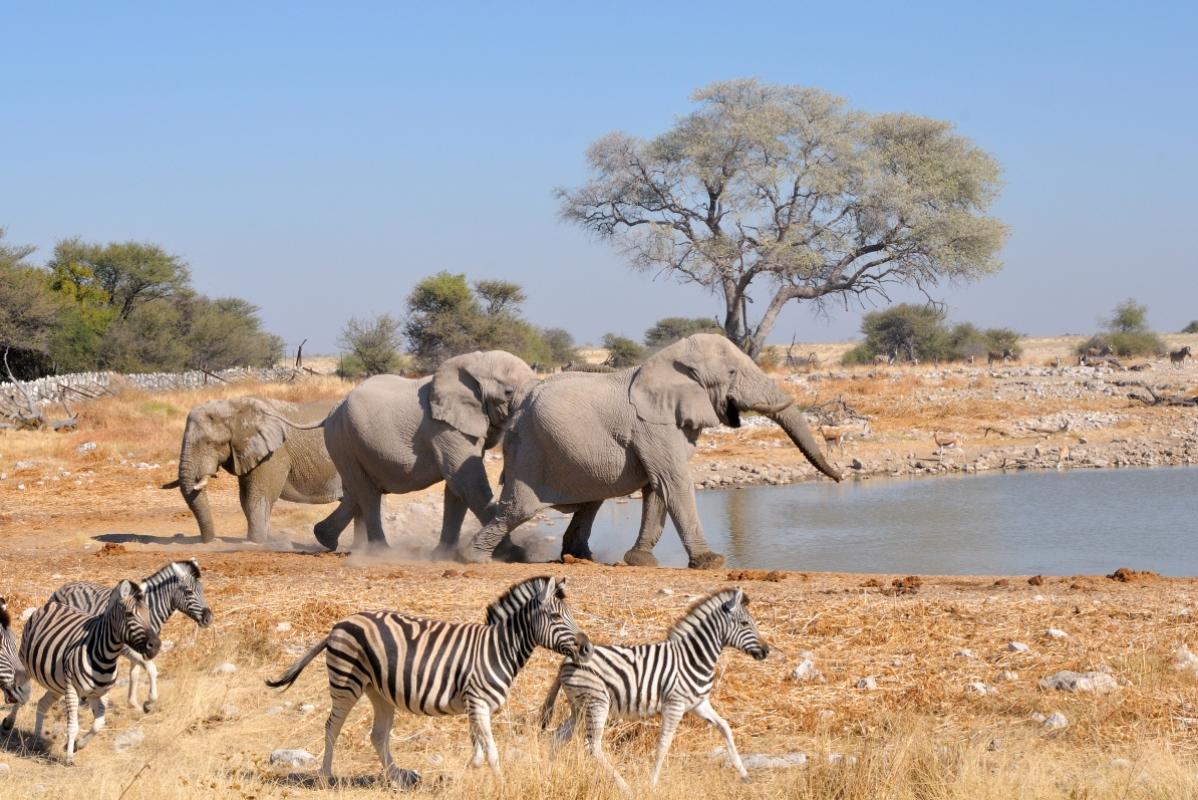 Etosha Tours From Windhoek