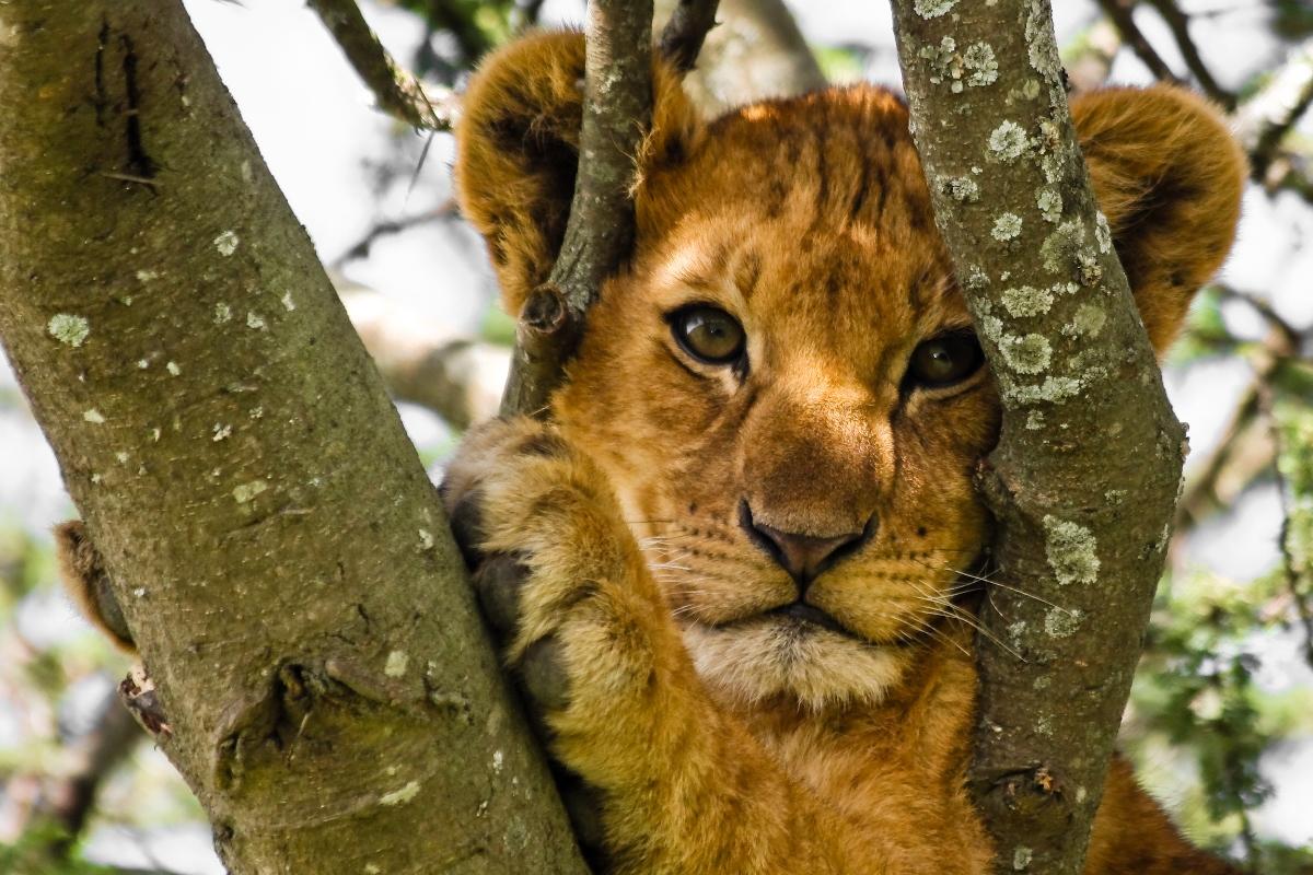 Wildlife Day Safari Cape Town Detour Africa