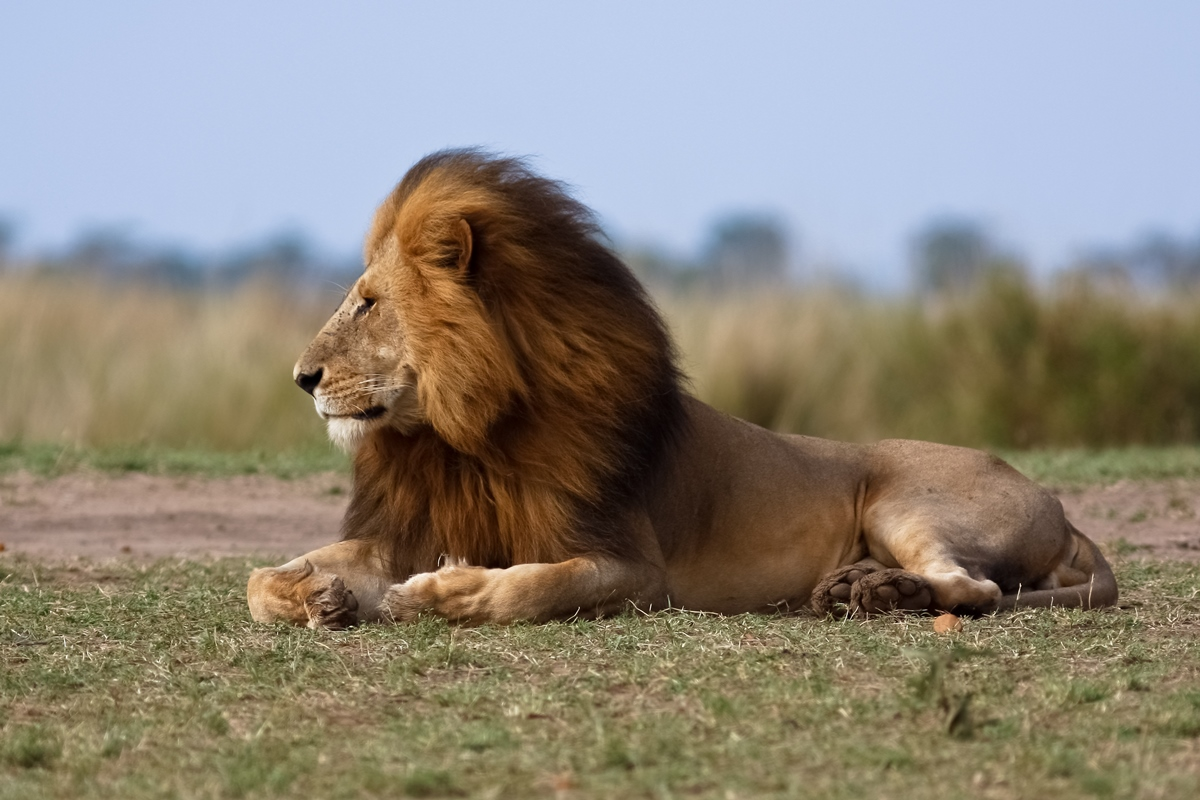 South Africa Budget Tour - Cape Town to Johannesburg Safari