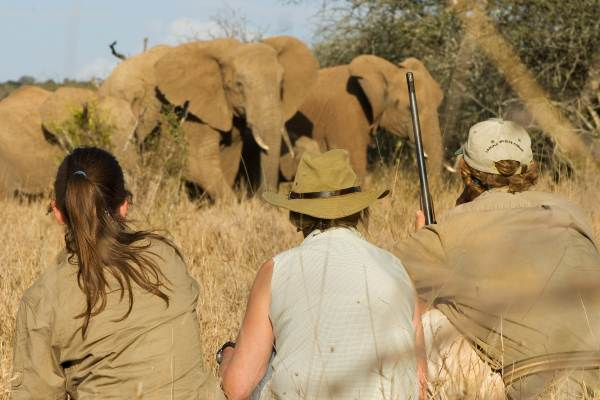 Kruger Park Walking & Wild Camping Safari