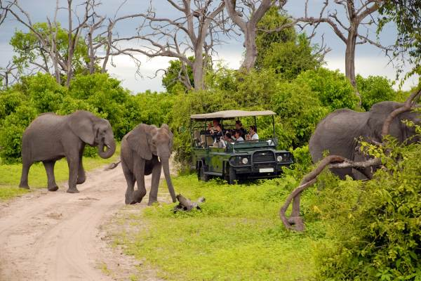Kruger Park Luxury Tree House Safari Package