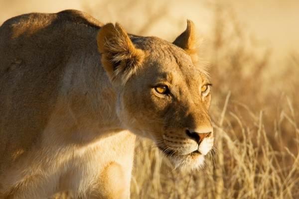 Kruger Park Luxury Tree House Safari