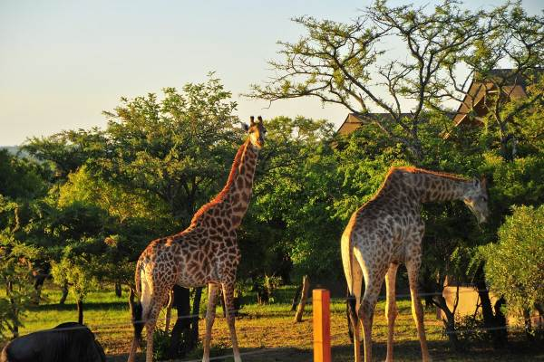 Kruger Park Exclusive Lodge Tour Package