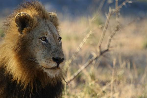 3 Day God's Window and Kruger Comfort Safari