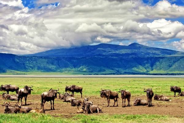 11 Day Serengeti, Ngorongoro Crater and Zanzibar Safari