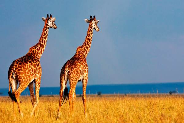 12 Day Serengeti to Zanzibar Safari Tour