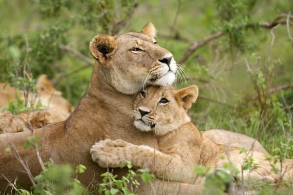 Johannesburg to Kruger & Mozambique Safari
