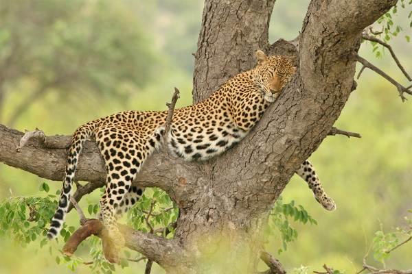 Kruger Park Safari - 2 Days