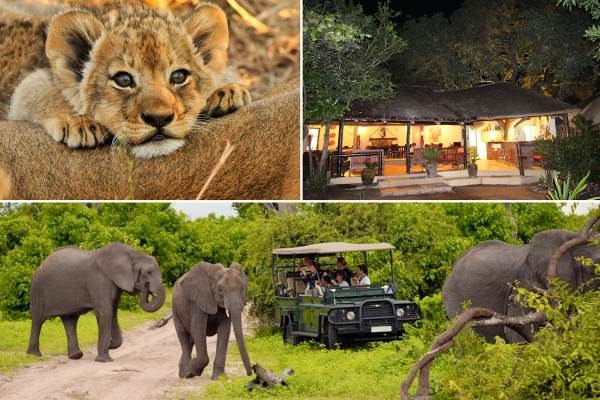 Kruger Park Lodge Safari Tour