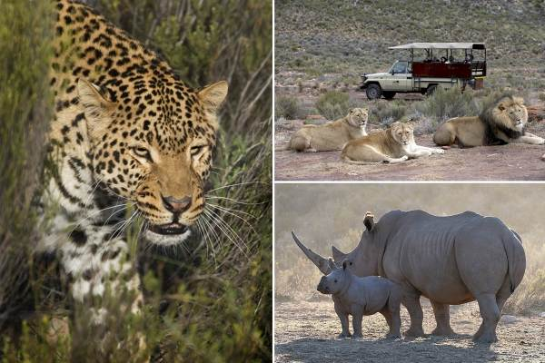 Wildlife  Day Safari - Cape Town