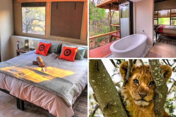 Kruger Park Luxury Lodge Safari