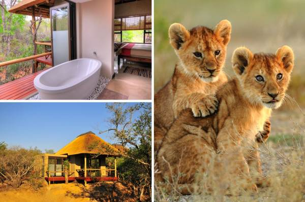 Kruger Park Luxury Lodge Tour Package