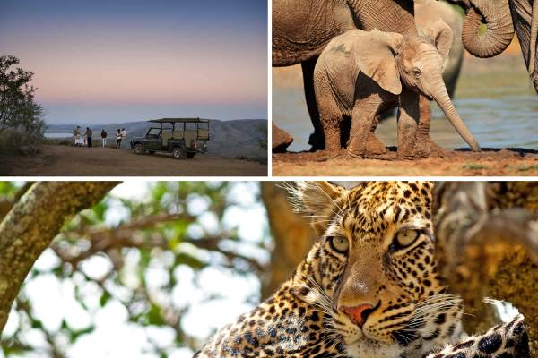 Johannesburg Budget Safari - 2 Days