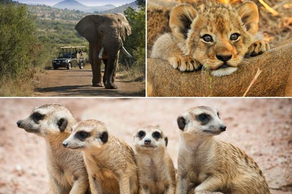 Pilanesberg Safari Tour - 3 Day Luxury Lodge