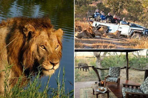 Sabi Sands Kruger Park Safari