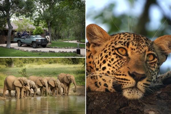 Sabi-Sands Luxury Lodge Safari