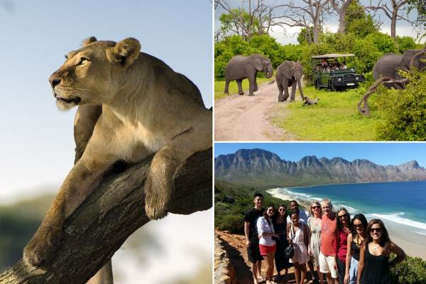 Cape Town to Garden Route and Kruger Comfort Safari