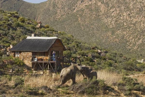 Cape Town Overnight Safari