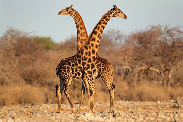 Kruger Park Tented Camp Safari - 5 Day