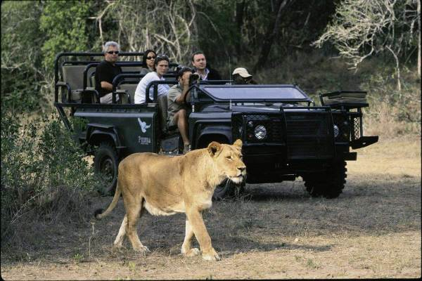 Kruger Park and Sabie Sands Safari Package