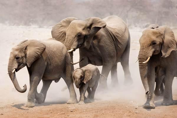 Namibia Camping Safari - Namib Desert & Etosha