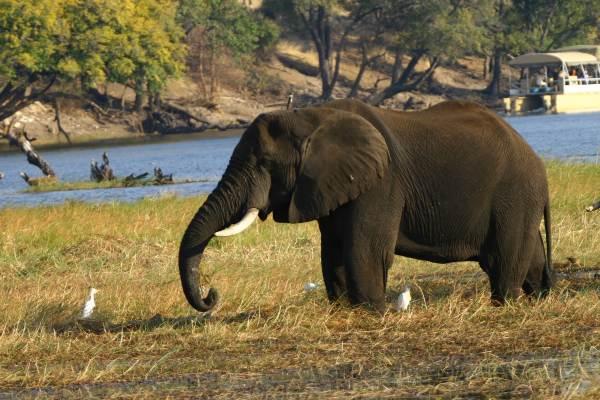 Victoria Falls, Botswana & Zimbabawe Loop - Lodge