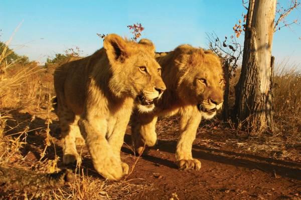 Victoria Falls to Nairobi Overland Safari - Camping