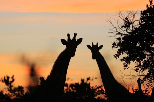 Nairobi to Victoria Falls Overland Tour
