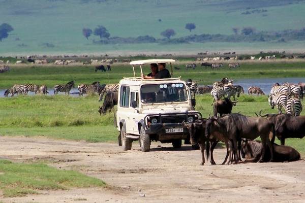 Serengeti Wildlife Safari