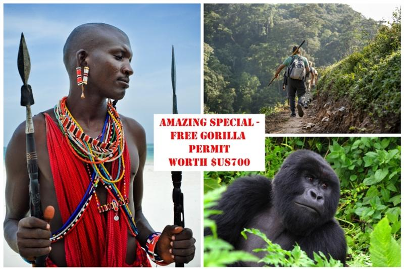 Have you ever thought about trekking with the Gorillas?
